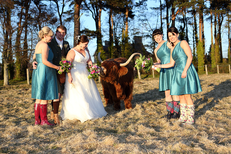 A Bit Of A Dowith A Highland Coo Scottish Wedding Images By
