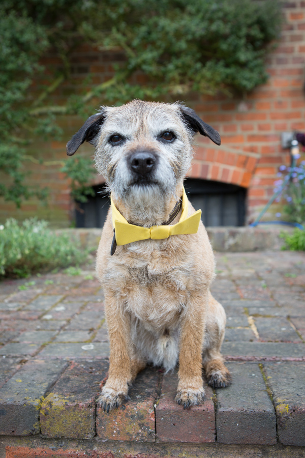 Hayley Ruth Photography, Sturmer Hall, pup in yellow bowtie