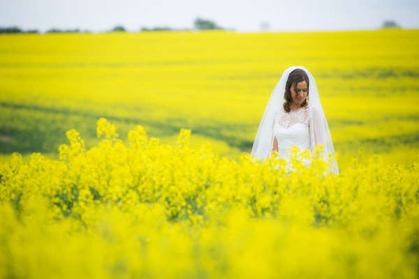 Hayley Ruth Photography, bride, field of yellow flowers