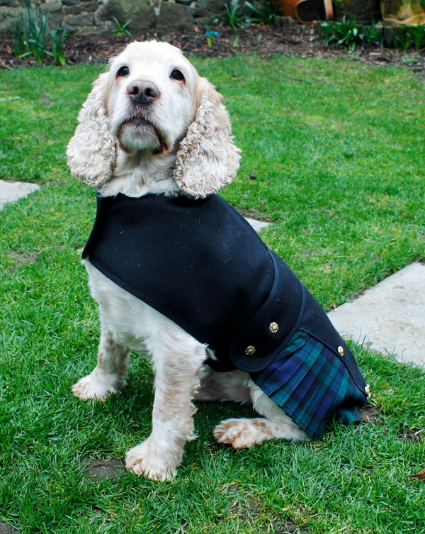Dog Kilts and Canine Wedding Fashion from Dugz